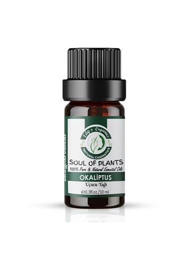 Edy's Organics Edy's Organics Okaliptus Uçucu Yağı(10 ml) Renksiz